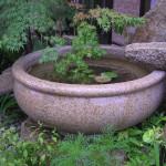 水鉢 浮き草が涼しげです。
